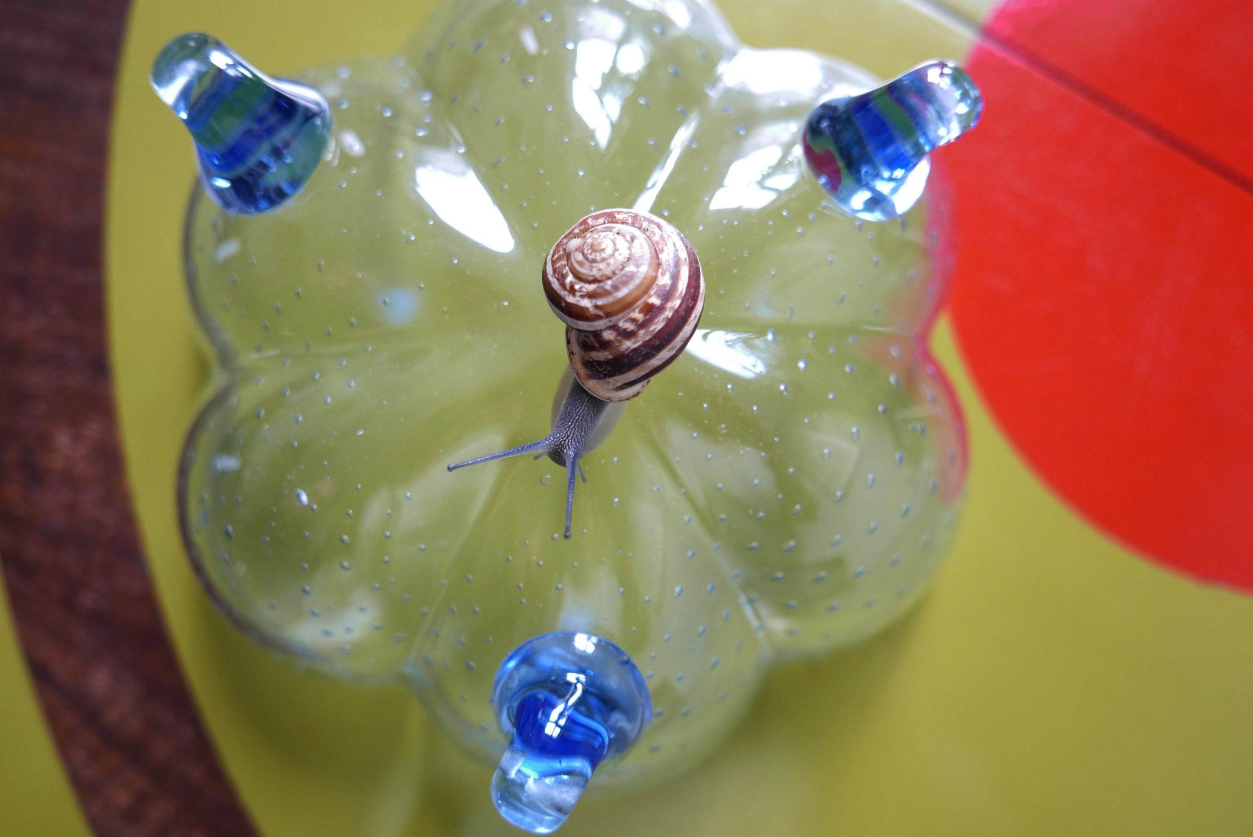 Schnecke und eine blaue Glasschale - slow Design