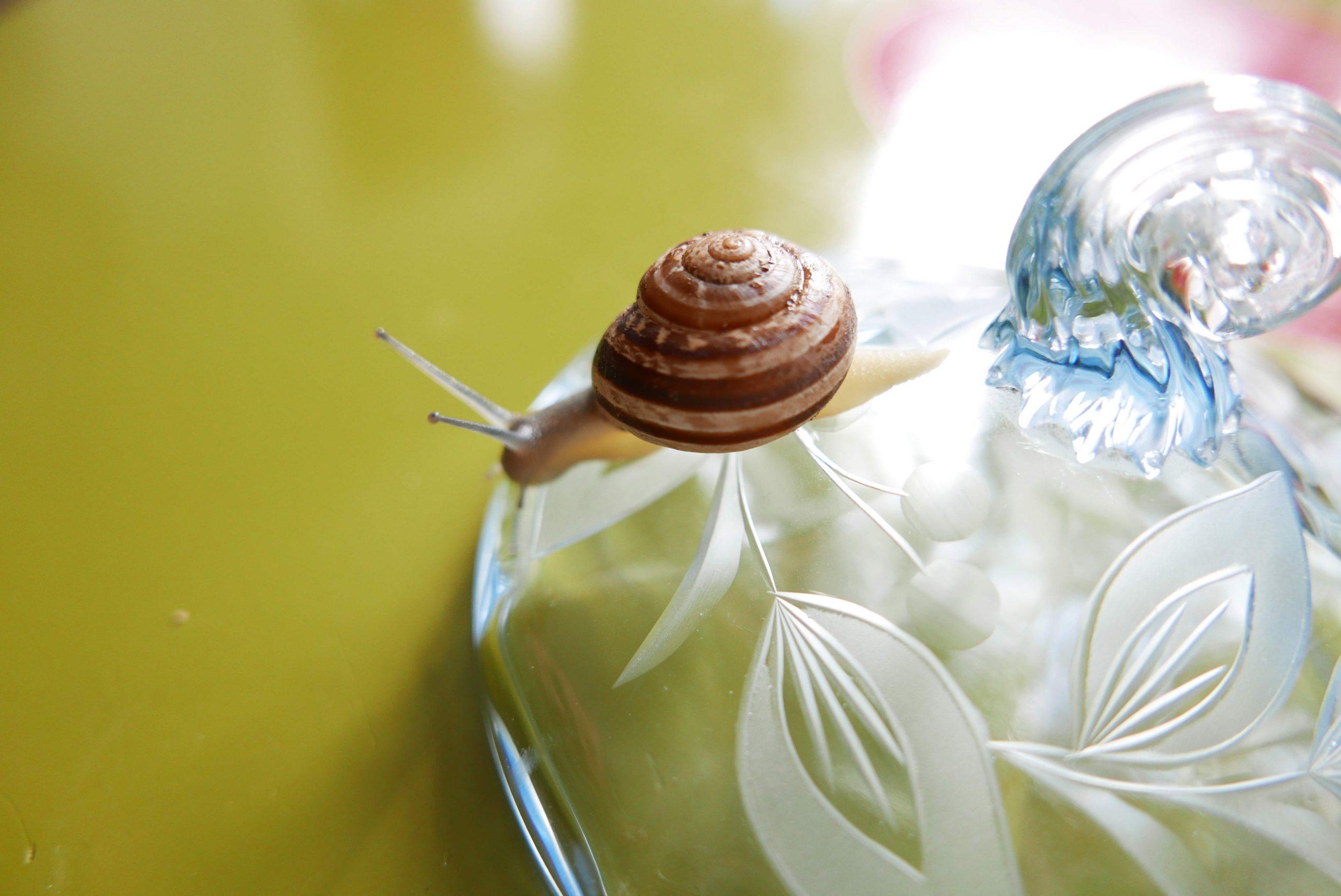 blauer Glasdeckel einer Bomboniere und eine Schnecke, slow Design