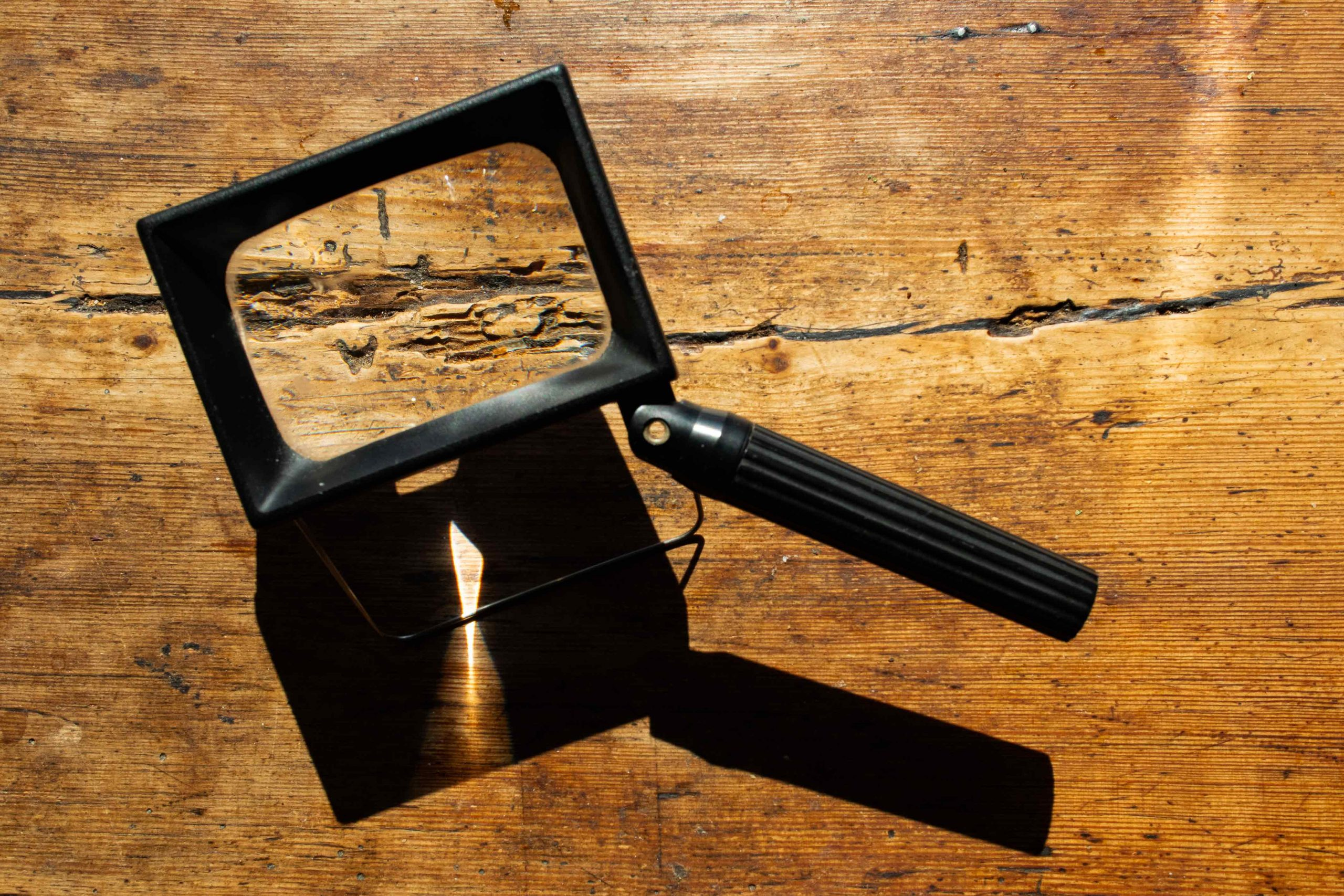 Struktur der Holzplatte unter der Lupe