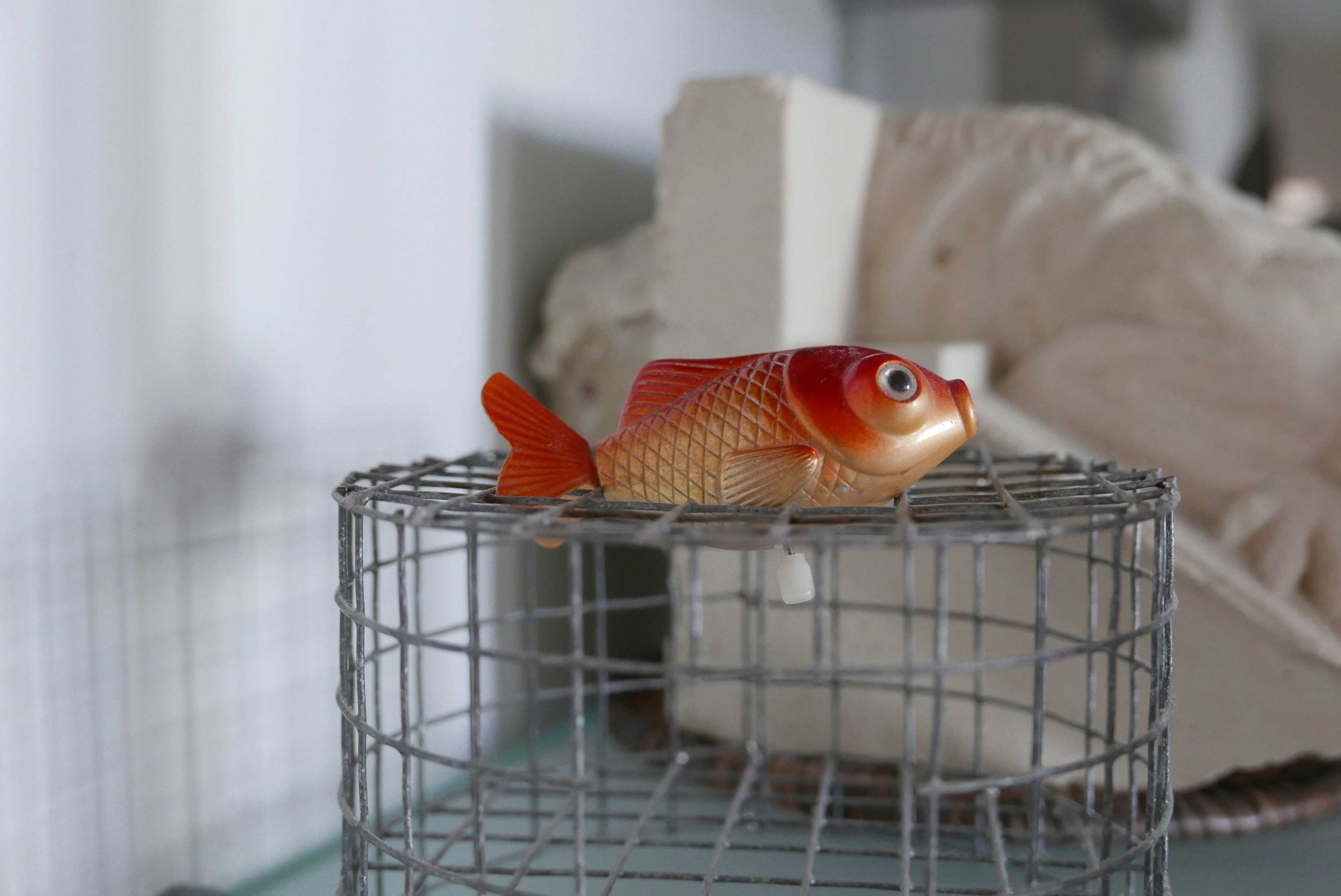 Plastikfisch zum Aufziehen im Regal