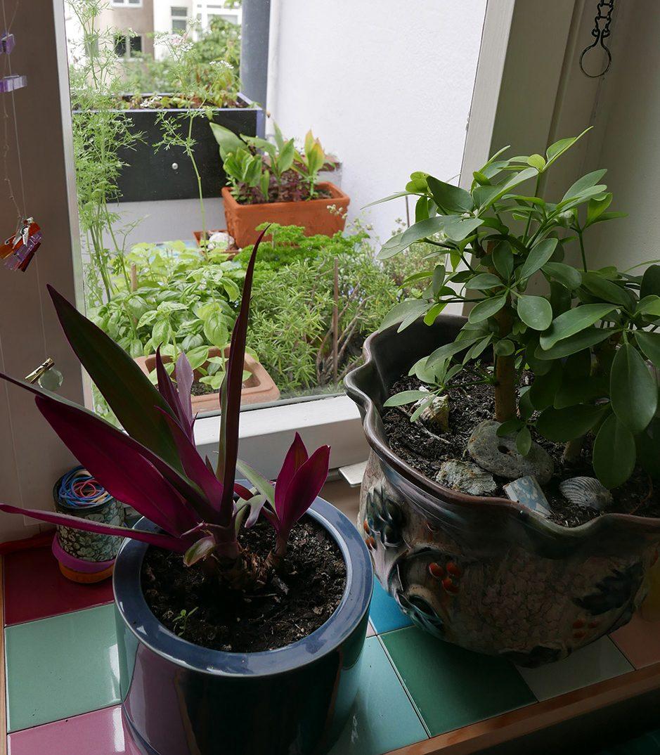 Mehr Platz und Farbe am Fenster: Fensterbankvergrößerung Ansicht mit Pflanzen