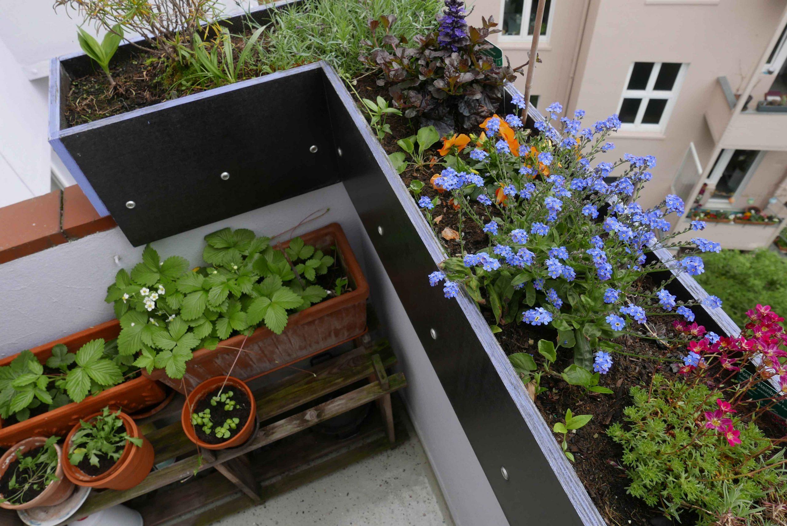 Blumenkasten Erhöhung der Brüstung Balkon aus Siebdruckplatten von oben gesehen