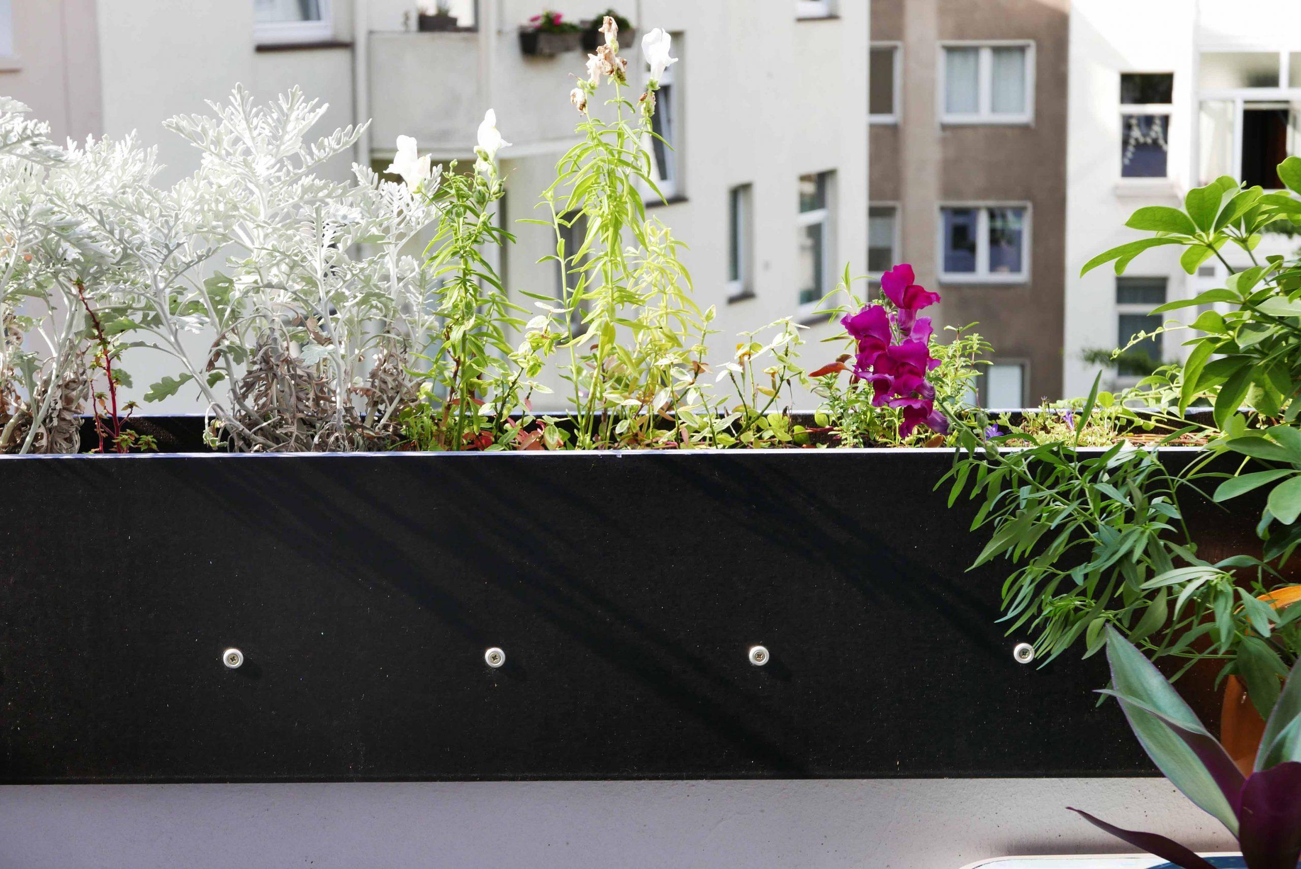 Erhöhung des Balkongeländes als Blumenkasten aus Siebdruckplatten